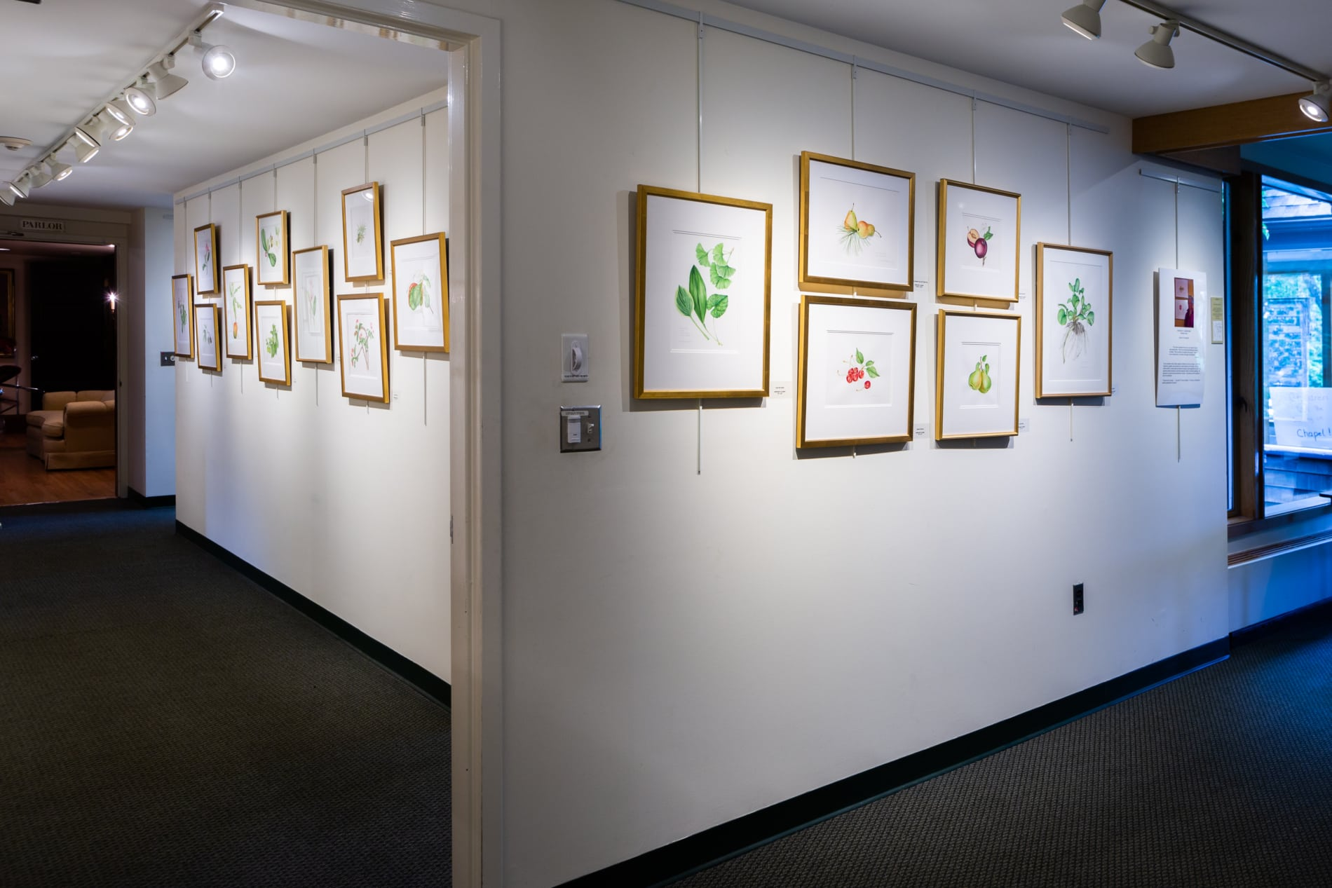 A wall displaying paintings